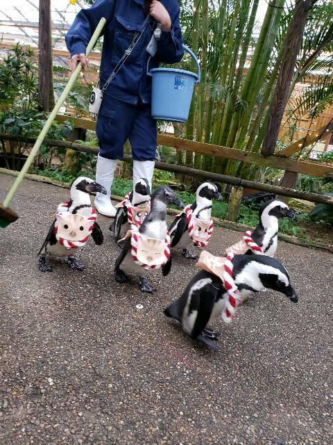 🐤『松江フォーゲルパーク』ペンギンの散歩 🐧🐧🐧 にフクロウショー 🐦 綺麗な花々と一緒 🌝_f0061067_2140195.jpg
