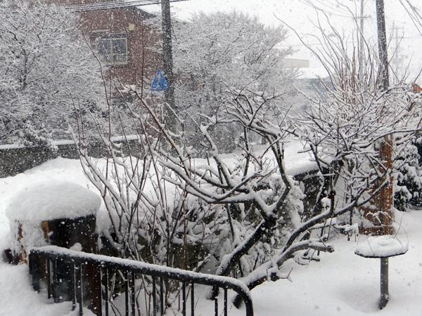 大晦日の雀ちゃんと降り積もる牡丹雪♪_a0136293_15021942.jpg