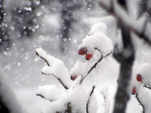 大晦日の雀ちゃんと降り積もる牡丹雪♪_a0136293_15032121.jpg