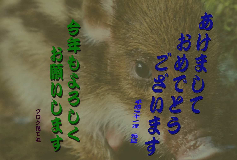 e0254493_11311286.jpg
