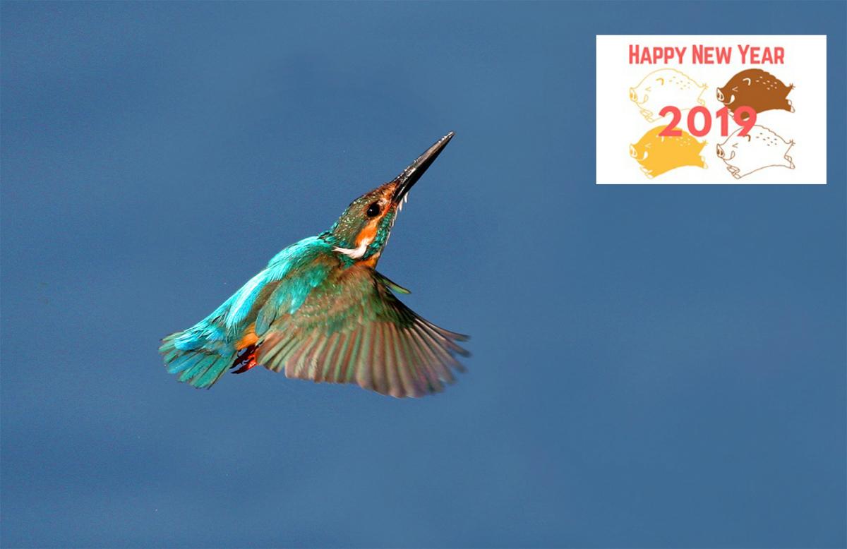 謹賀新年。_b0044115_08421098.jpg