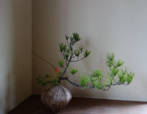 年始の花 ー松を生ける_a0197730_22024288.jpg