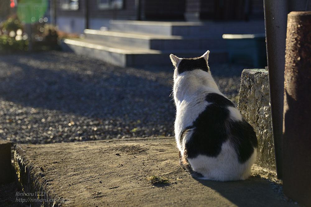 2019.1.1&2【合併号】我が家の猫☆とらたろう、まおちゃん、ましゅう、くぅちゃん_f0250322_19184882.jpg