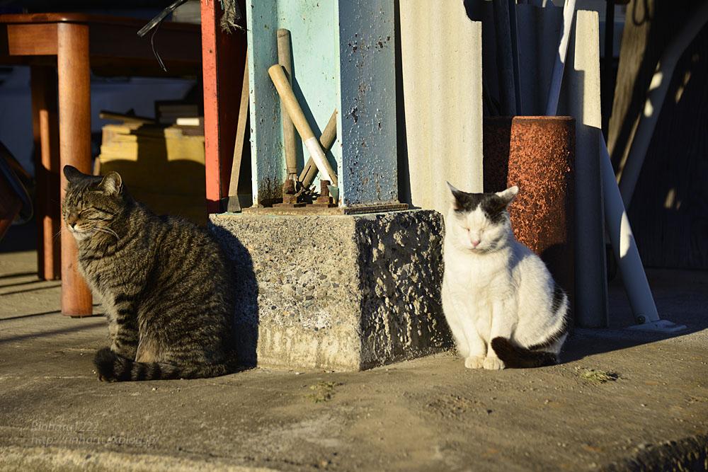 2019.1.1&2【合併号】我が家の猫☆とらたろう、まおちゃん、ましゅう、くぅちゃん_f0250322_19185432.jpg