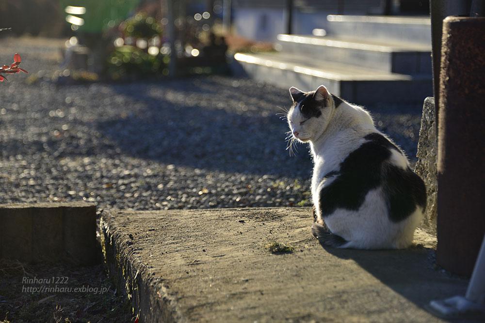 2019.1.1&2【合併号】我が家の猫☆とらたろう、まおちゃん、ましゅう、くぅちゃん_f0250322_1918594.jpg