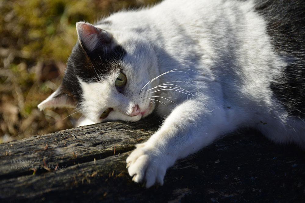 2019.1.1&2【合併号】我が家の猫☆とらたろう、まおちゃん、ましゅう、くぅちゃん_f0250322_19191790.jpg