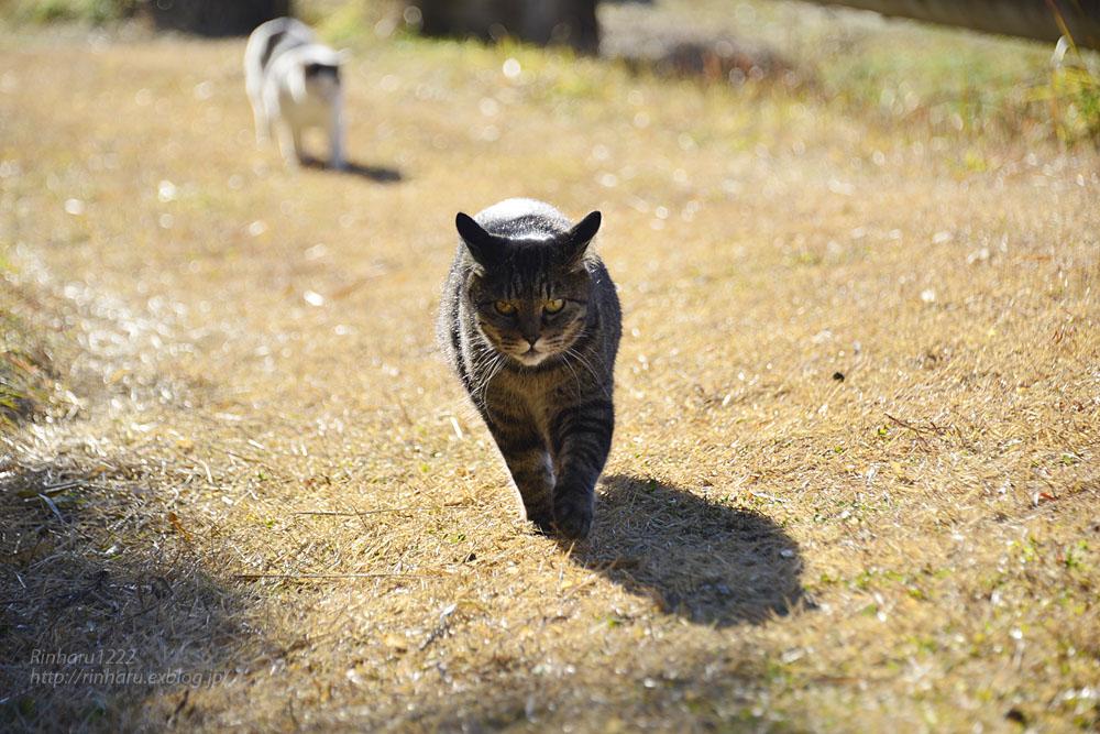 2019.1.1&2【合併号】我が家の猫☆とらたろう、まおちゃん、ましゅう、くぅちゃん_f0250322_19193563.jpg
