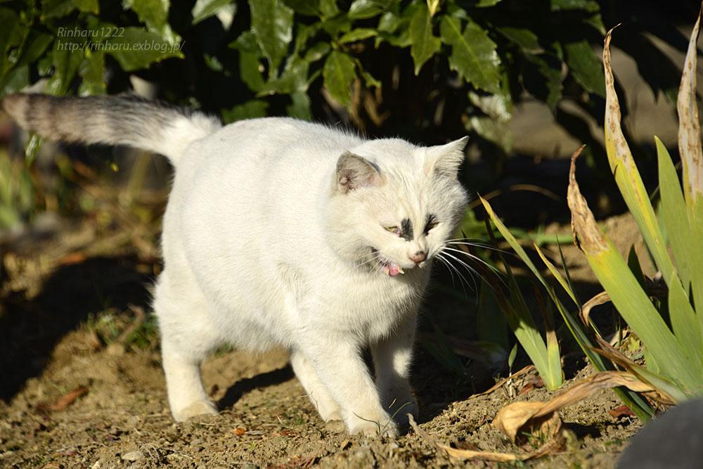 2019.1.1&2【合併号】我が家の猫☆とらたろう、まおちゃん、ましゅう、くぅちゃん_f0250322_1920326.jpg
