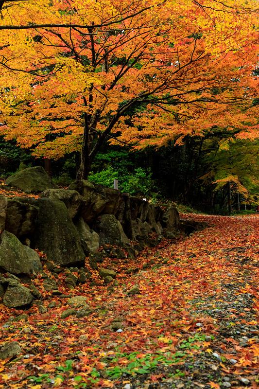 滋賀の紅葉2018 引接寺の秋景色_f0155048_2242330.jpg