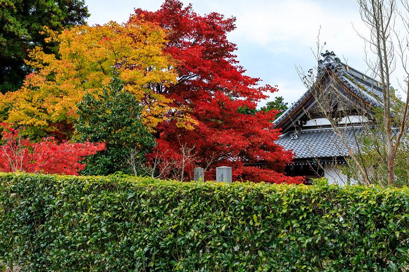 滋賀の紅葉2018 引接寺の秋景色_f0155048_2251148.jpg