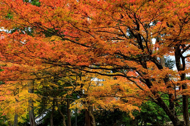滋賀の紅葉2018 引接寺の秋景色_f0155048_2251562.jpg
