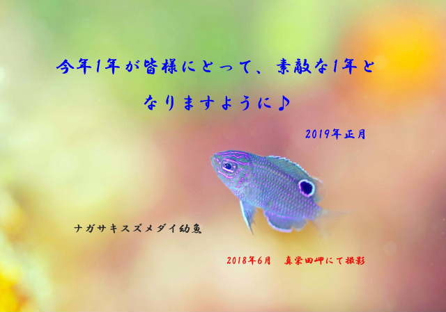 a0155467_18332684.jpg
