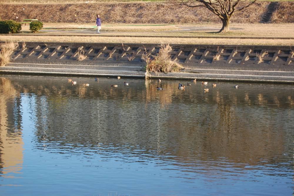 元旦に矢田川を散歩_f0159784_11214268.jpg