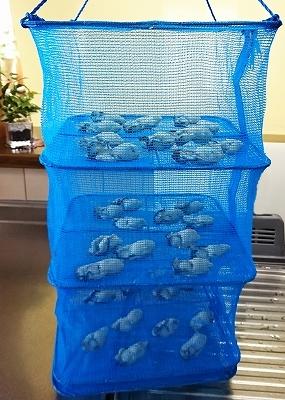 牡蠣の燻製オリーブオイル漬け_e0289203_21575588.jpg
