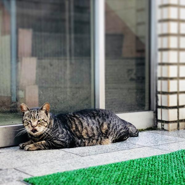 新宿区三栄町 / iPhone 8_c0334533_23300252.jpg