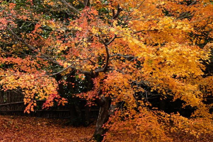 嵐山 紅葉2018_f0021869_00543705.jpg