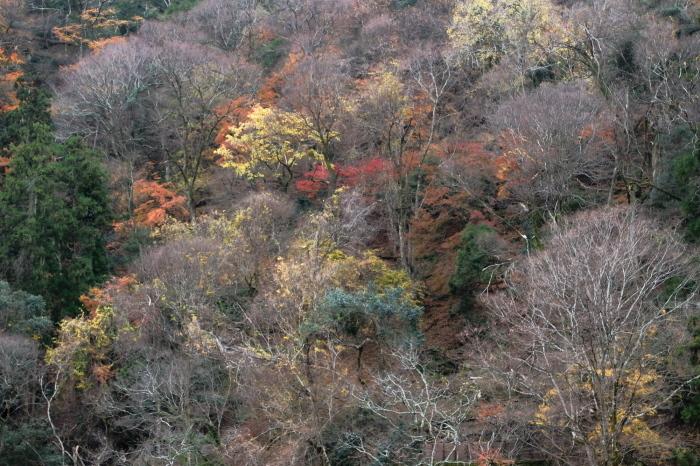 嵐山 紅葉2018_f0021869_00544015.jpg