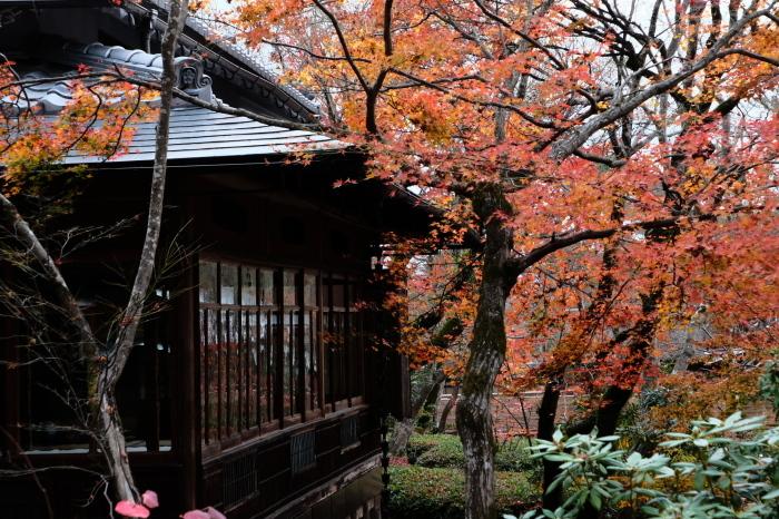 嵐山 紅葉2018_f0021869_23011888.jpg