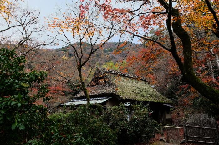 嵐山 紅葉2018_f0021869_23045800.jpg