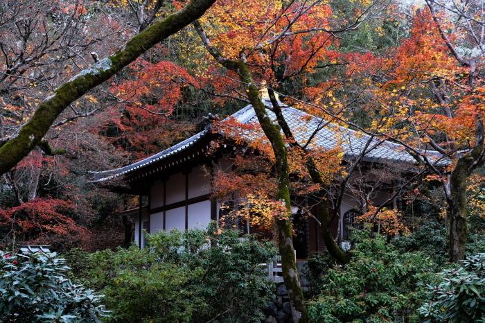 嵐山 紅葉2018_f0021869_23045823.jpg