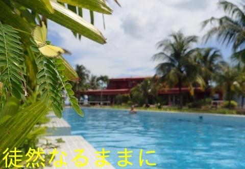 Hotel The Ocean Residence Langkawiの蝶たち_d0285540_20130929.jpg