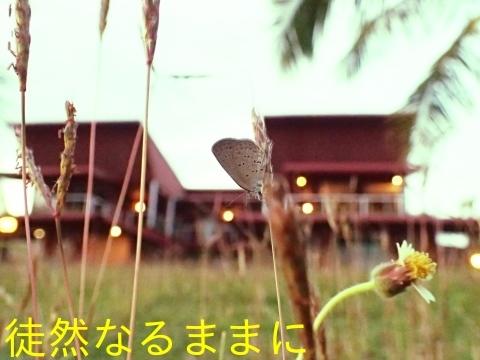 Hotel The Ocean Residence Langkawiの蝶たち_d0285540_20240282.jpg