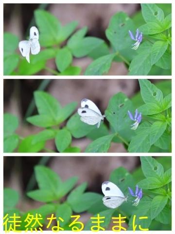元旦 AM ホテルの周りの蝶たち_d0285540_21524147.jpg
