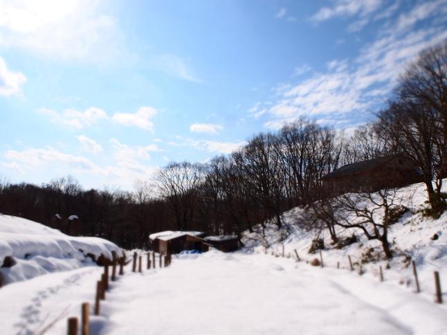 冬のあれこれ_a0281547_14273283.jpg