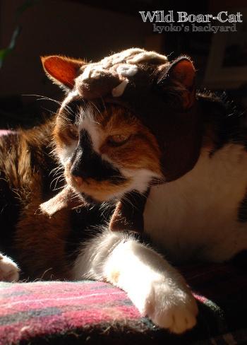 イノシシ猫・Whitney_b0253205_05460752.jpg