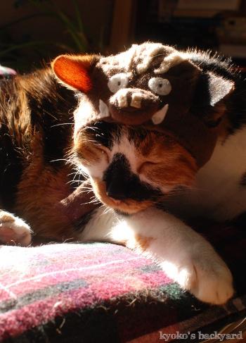 イノシシ猫・Whitney_b0253205_05462597.jpg