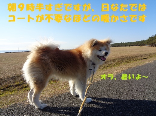 f0121712_15045041.jpg