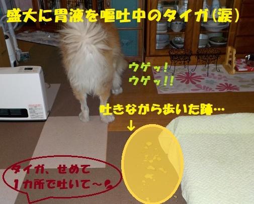 f0121712_15304817.jpg