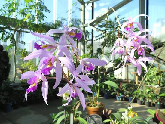 冬は温室、温室の花たち_c0192215_17352921.jpg