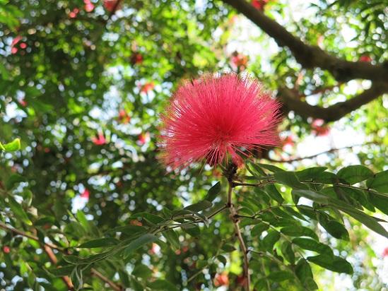 冬は温室、温室の花たち_c0192215_17493771.jpg