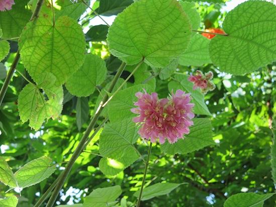 冬は温室、温室の花たち_c0192215_17534286.jpg