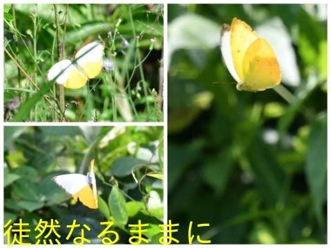 元旦 AM ホテルの周りの蝶たち_d0285540_19473530.jpg