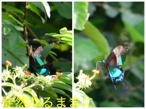 元旦 AM ホテルの周りの蝶たち_d0285540_19491890.jpg
