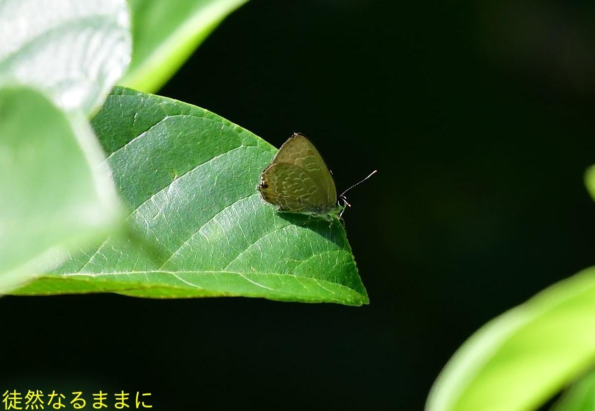 元旦 AM ホテルの周りの蝶たち_d0285540_19520181.jpg