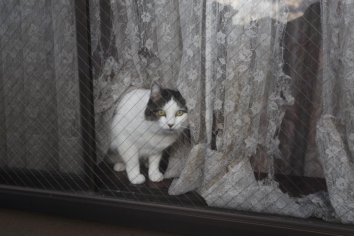 19.01.05 窓猫_b0193366_20455137.jpg