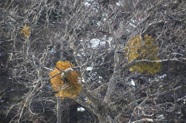 冬の軽井沢①:町を散策~雲場池_c0124100_15473081.jpg