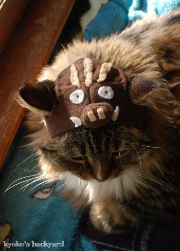 イノシシ猫・Bailey_b0253205_05592229.jpg