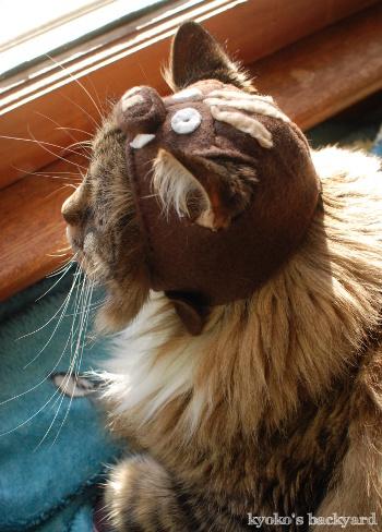 イノシシ猫・Bailey_b0253205_06000406.jpg