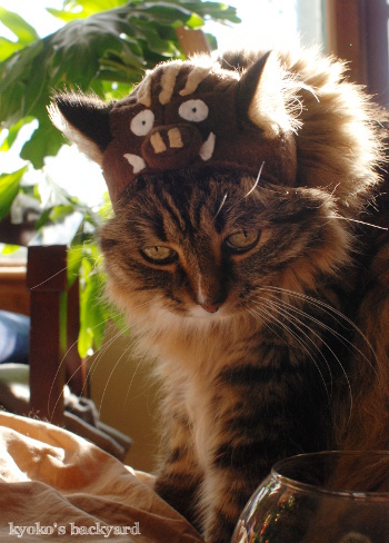 イノシシ猫・Bailey_b0253205_06022737.jpg
