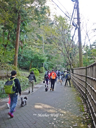 第25回マザーウルフ遠足 鎌倉源氏山レポート_e0191026_16060518.jpg