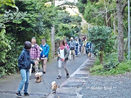 第25回マザーウルフ遠足 鎌倉源氏山レポート_e0191026_16063035.jpg