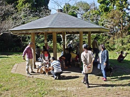第25回マザーウルフ遠足 鎌倉源氏山レポート_e0191026_17264935.jpg