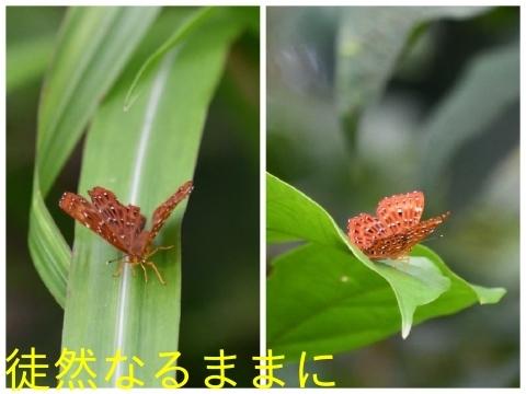 元旦 PM ホテルの周りの蝶たち_d0285540_15361234.jpg