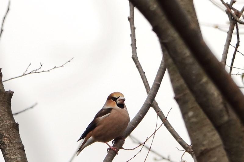 野鳥トレ 151 森林植物園_b0227552_19315784.jpg