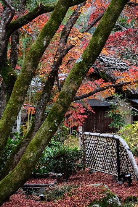 嵐山 紅葉2018_f0021869_15395524.jpg