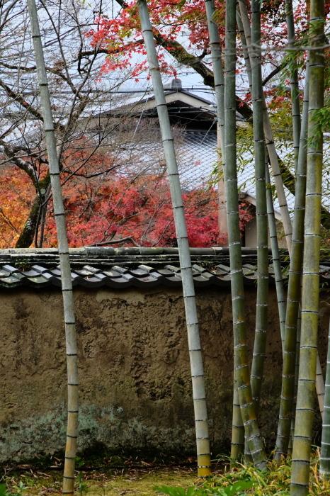 嵐山 紅葉2018_f0021869_15410996.jpg